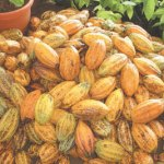 Osun will invest massively in cocoa production - Aregbesola