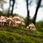 Mushroom farmers to get support