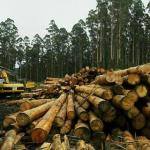 Ghana to start importing timber from Liberia next month