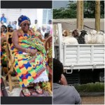 Akuapem Queenmother  Rejects Akufo-Addo's 62 Rams & 62 Bottles Of Schnapps
