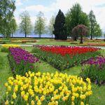 Швейцария.Женева.Выставка тюльпанов в Морже.