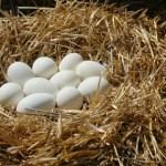 Как куриные яйца помогают сбросить вес: развенчан миф