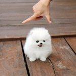 Прикольный танец маленькой собачки