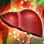 Почему возникает жировой гепатоз?