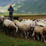 Консультант и пастух.