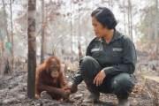 kebakaran-di-indonesia-menyebar-ke-taman-nasional-dan-hutan-_151107015616-284