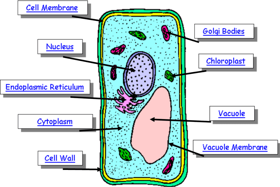 plant cell diagram with labels solar panels wiring installation parts of a