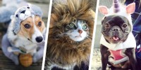 35 Best Dog and Cat Halloween Costumes 2017 - Cute Pet ...
