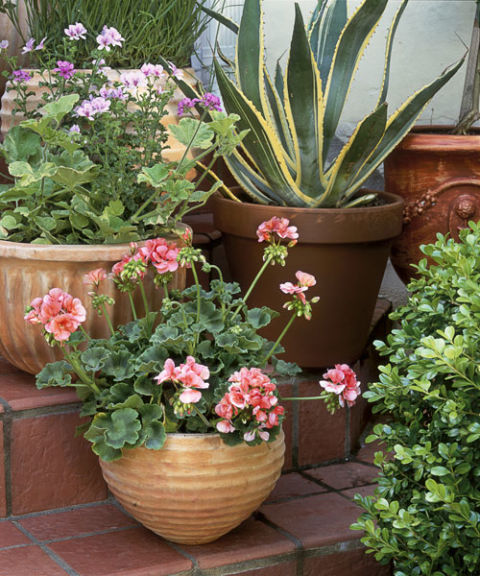 To create contrast and visual vibrancy, situate curvaceous containers on stairs and fill with interestingly shaped plants, from scallop-leafed geraniums to spiky, serrated agave. Or, try combining vertical foliage with one that will spill over the sides to double up on varieties.