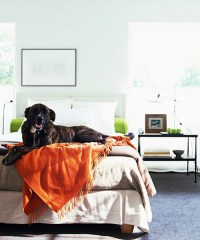 Training Your Dog to Stay Off Your Bed - Dog Training ...