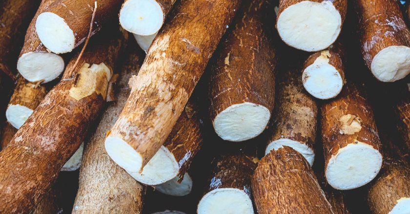 Cassava Processing Factory for Keta under 1D1F to be ready by September