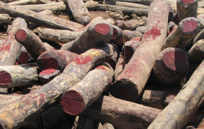Name and shame big-wigs behind rosewood logging –Participants