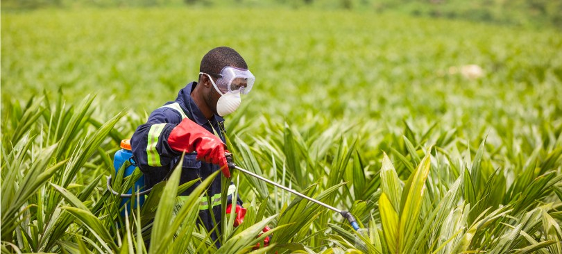 Agro-procession and Tourism present an opportunity for job creation-Experts
