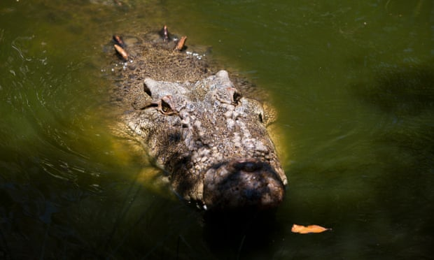 Second crocodile killed and examined for human remains after man went missing in Queensland