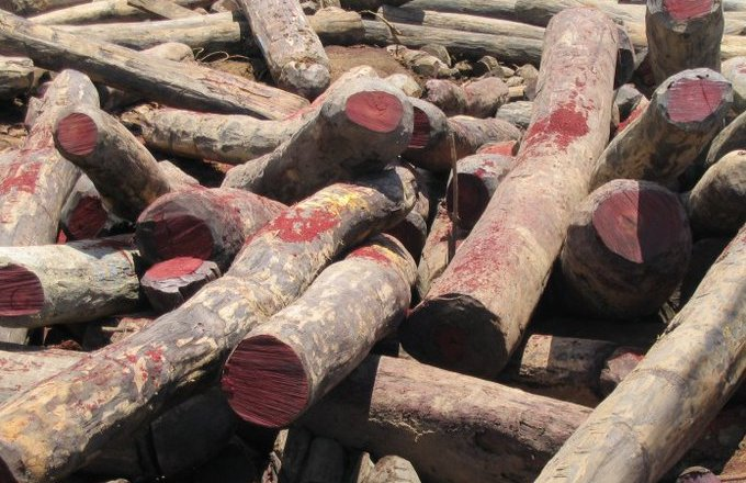 5 containers of Rosewood impounded at Tema Port