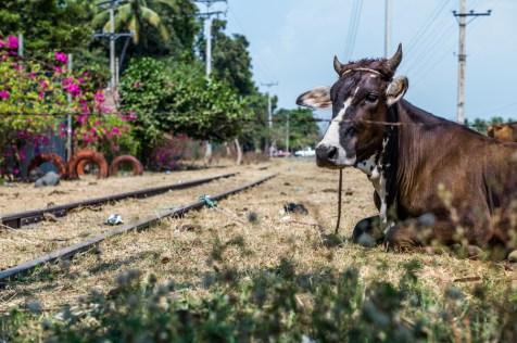 An der Bahnstrecke von San Salvador zum Pazifik