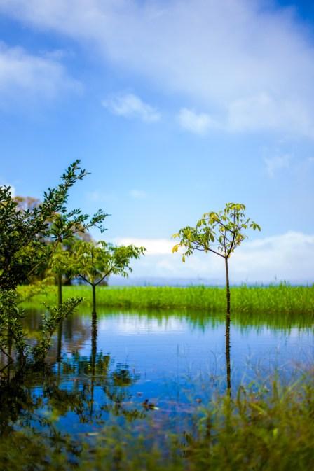 Laguna Arenal 1