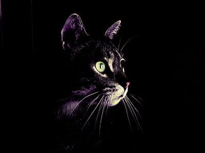cat, darkness, eyes, green, feline, black