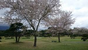 桜まつりゴルフ合宿#8