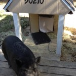 Piccolo's house