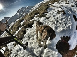 cane da tartufo grigne grignone invernale rifugio brioschi giacomo longhi elisa broggi claudio camp cassin pialleral traversata alta bassa comolli mountainspace (8)