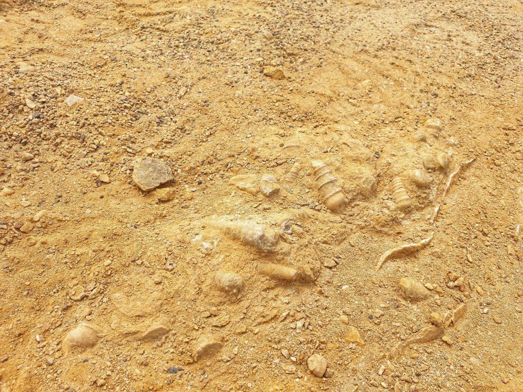 fossili riserva nazionale paracas