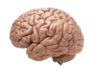 cervello giovane
