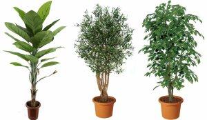 piante in inverno