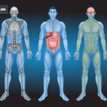 Phát hiện bộ phận mới trên cơ thể người
