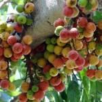 7 loại trái cây cực tốt cho sức khỏe, mọi người không nên bỏ qua
