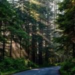 Cha mẹ bỏ con 5 tuổi trong rừng để trừng phạt tội tè bậy