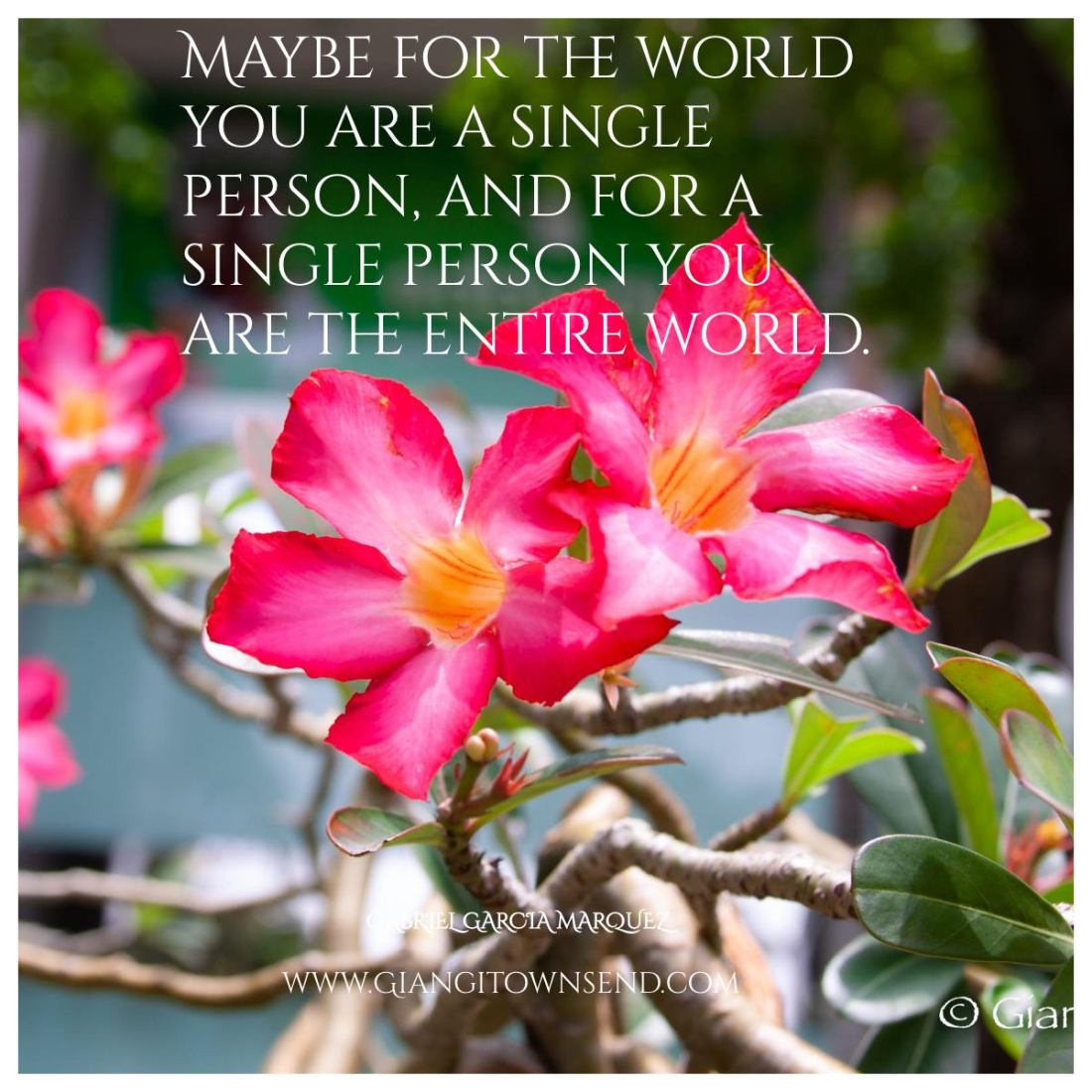 maybe for the world...