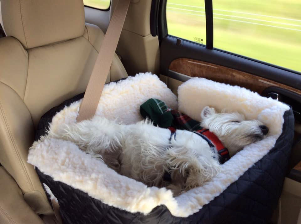 Love to Travel with Our Westie. Love the Westietude