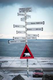 Pericolo orsi polari