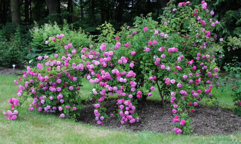 Giardini  Giardini Dinamici
