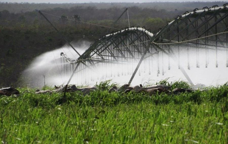 Fazenda aumenta produtividade na pecuária com auxílio da irrigação 3