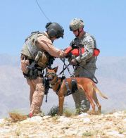Military_dog_in_Afghanistan_being_prepared_for_a_helicopter_hoist