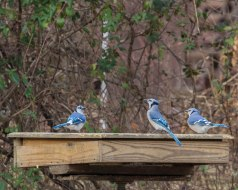 birds-12