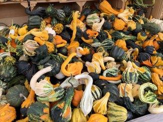 img_9792-multi-gourd