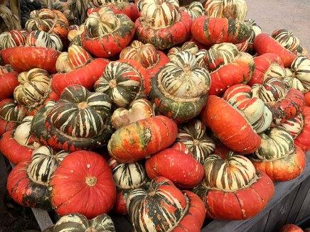img_9798-orange-turban-squash