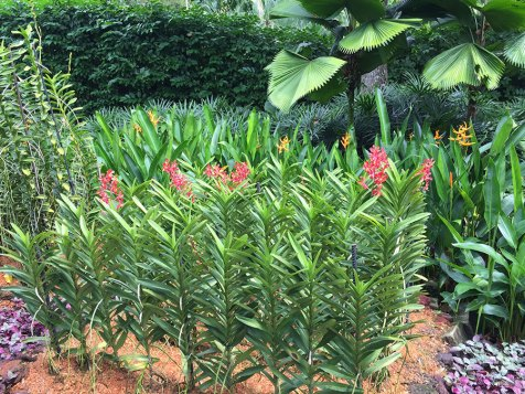 Singapore Botanic Gardens - Orchids - Rows of Orchids