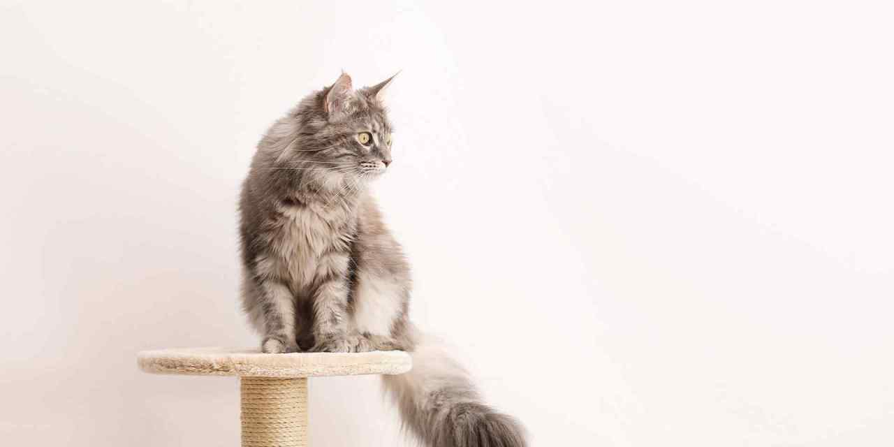 Can Cats Stay Home During Vacation?