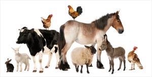 Şifalı Hayvanlar ve Hayvanlarla Tedavi