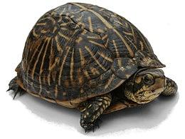 Kaplumbağayla Tedavi