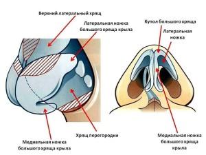 Какое строение имеет и какую функцию выполняет носовая полость? Носовая полость (нос) Сообщается носовая полость.