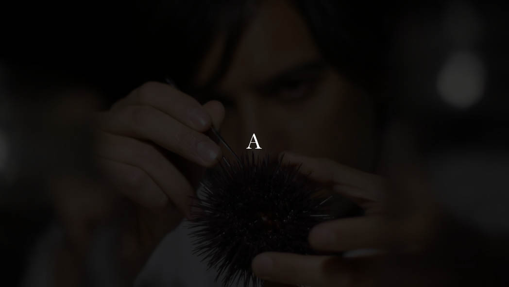 Sea Urchin (2)