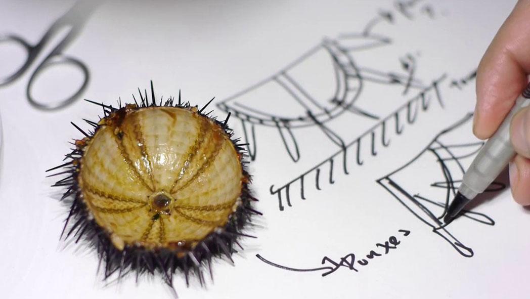 Sea Urchin (5)