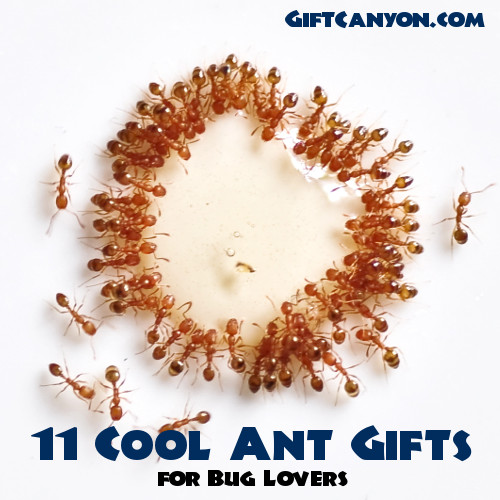 Stronger Than An Ant Gifts
