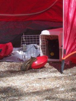 travel cat camping