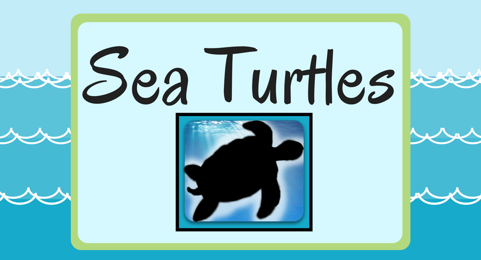 Perfect Gift Ideas for Those Who Adore Sea Turtles